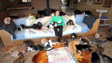 La mujer que se mudó a una caravana para que sus 1.000 gatos vivieran en su casa