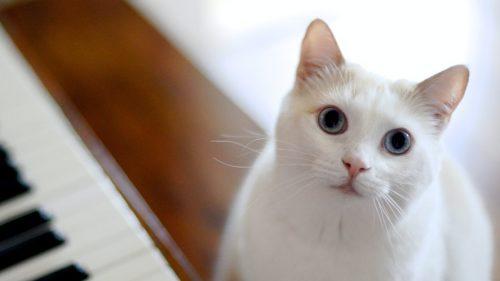 ¿Qué rollo se traen los gatos con FKA twigs?