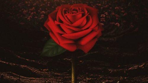 Jackboy lanza «Love Me While I'm Here» con Tyga, Kodak Black y 42 Dugg